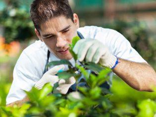 gardener in greenhouse
